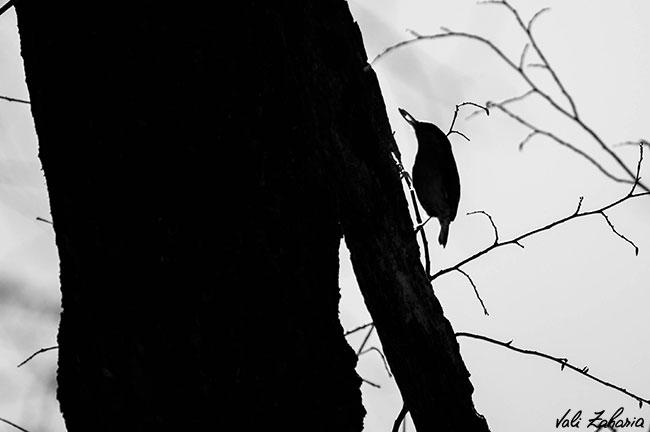 tree_bird