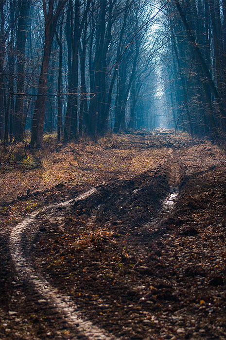 into_the_forest